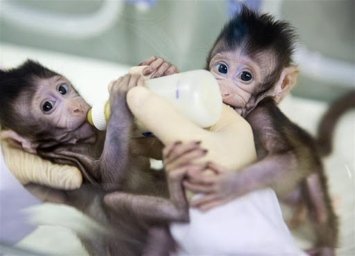 pros and cons of animal cloning