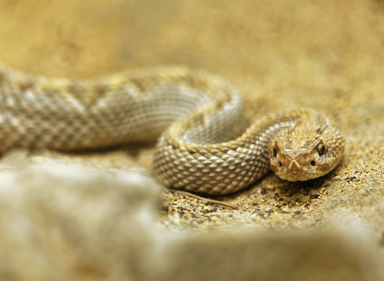 Study Finds Surprising Connections Between Snake Venom and Our Saliva