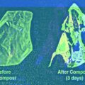 compostable plastic