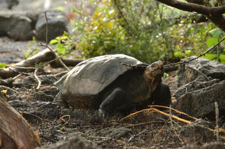 Galapagos Conservancy
