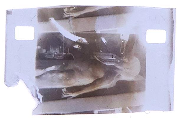 alien autopsy nft