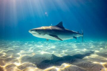 shark magnetic field